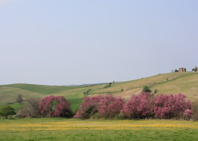 agriturismo_tuscany_cerinella_wedding_view_springtime