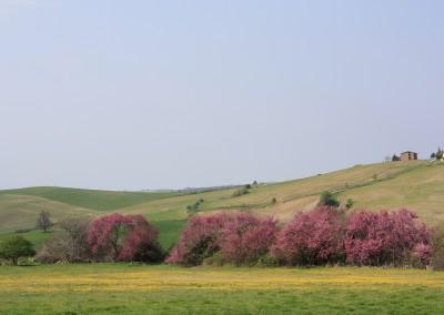 agriturismo_tuscany_cerinella_wedding_view_springtime