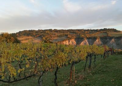 agriturismo_tuscany_cerinella_wedding_vineyard