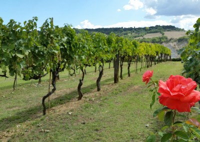 agriturismo_tuscany_cerinella_wedding_vineyard_spring