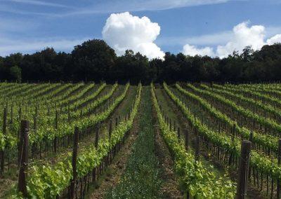 antica casale, agriturismo & winery, maremma (16)