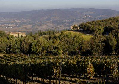 wine farm_seggiano_tuscany_wedding_cerinella_eventplanner (2)