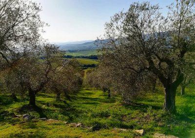 wine farm_tuscany_wedding location_cerinella_eventplanner (2)