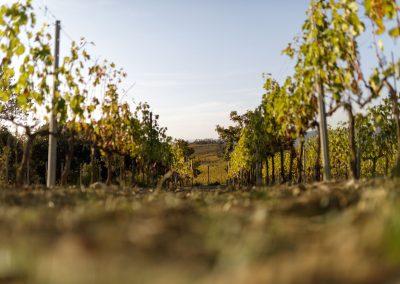 wine farm_wedding location_tuscany_cerinella_eventplanner (4)