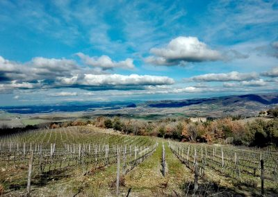 wine farm_wedding location_view_cerinella_eventplanner_tuscany